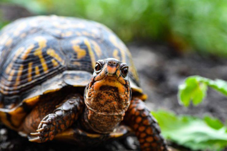turtle diseases man