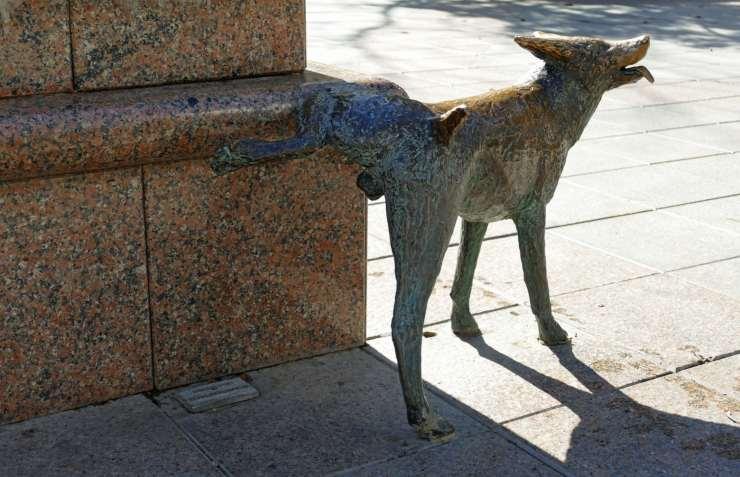 Dog urinates