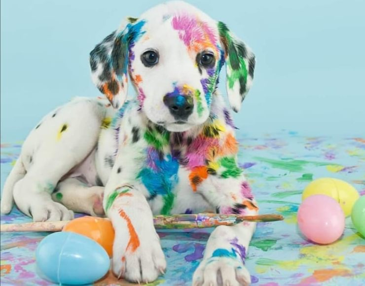Easter with the dog