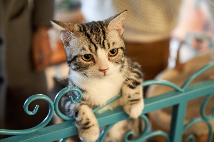 perfect cat for you