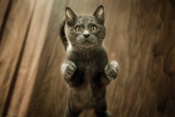 cat catches laser