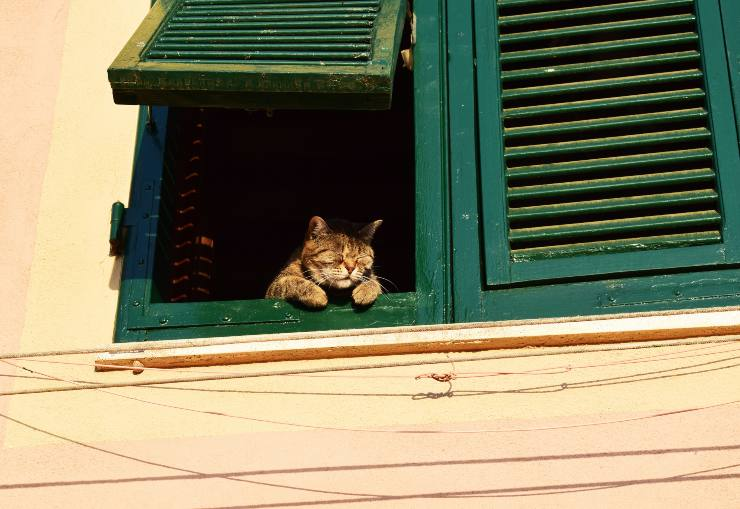 cat looks out