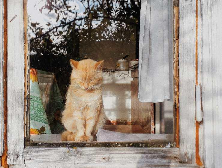 window door cat
