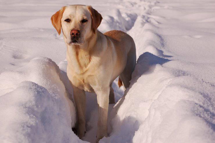 dog snow paws
