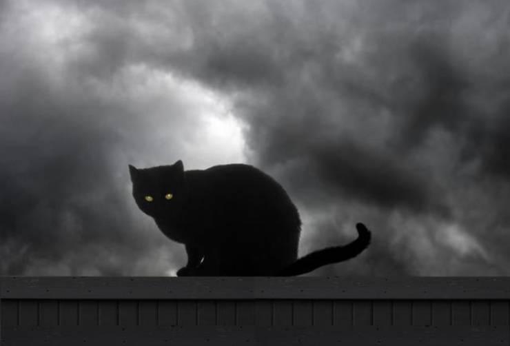 mythological cats black cat legends