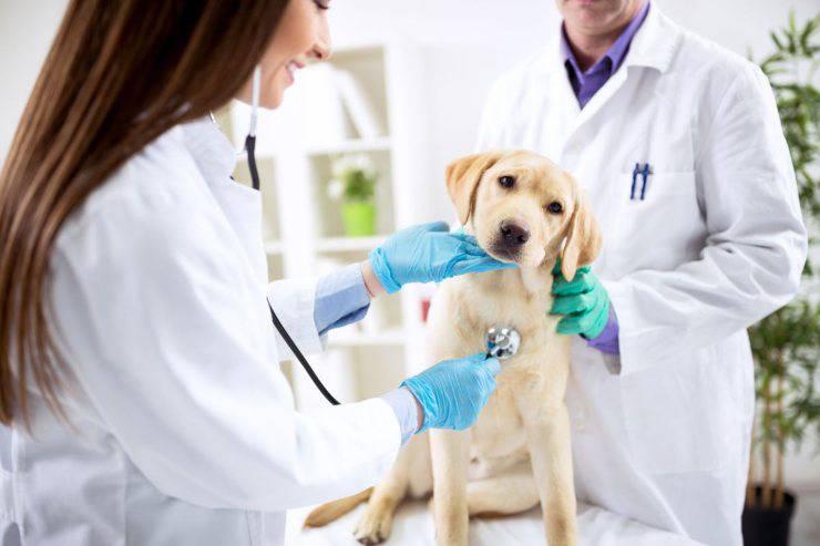 vaccinate coronavirus animals