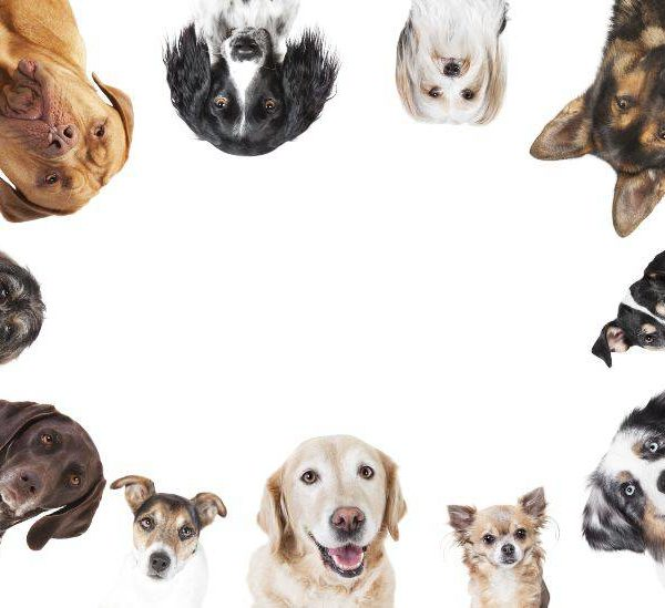 Top 10 Best-selling dog breeds: Extraordinary specimens