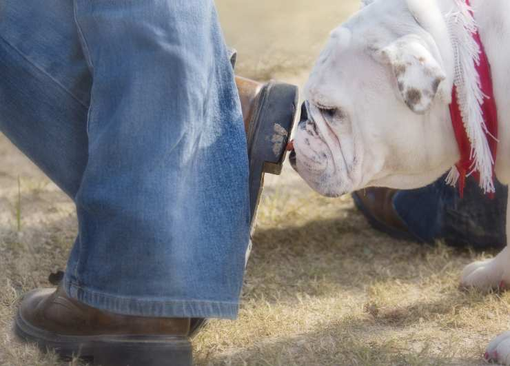 how to clean shoes from dog poop