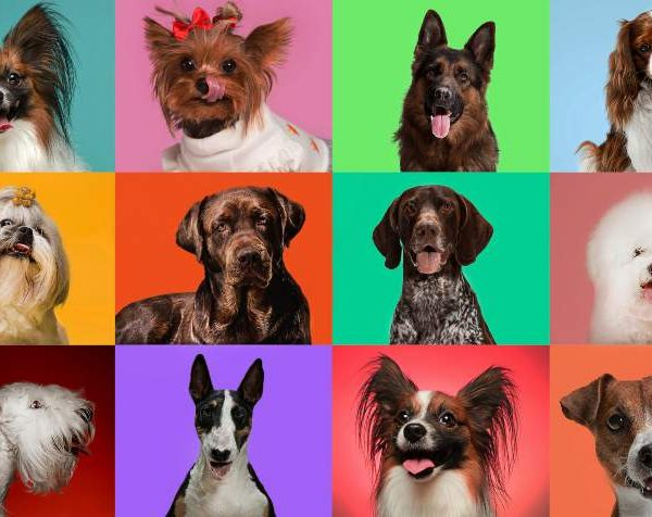 Top 10: Which dog fits your personality – Breeds and Their  personality