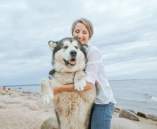 The 10 Strongest Dog Breeds in the World + Characteristics