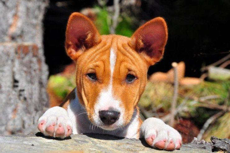 puppy dog africa