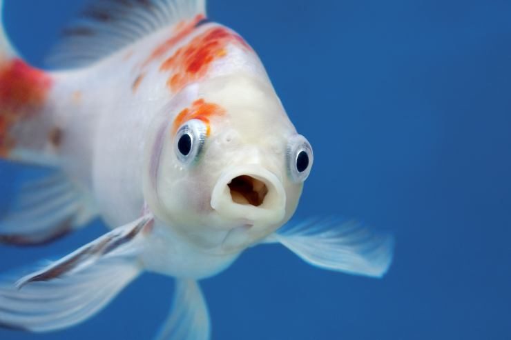 even the fish yawn