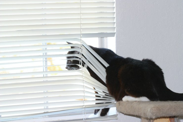 Cat looking out Window: 5 Ways To Increase Comfort