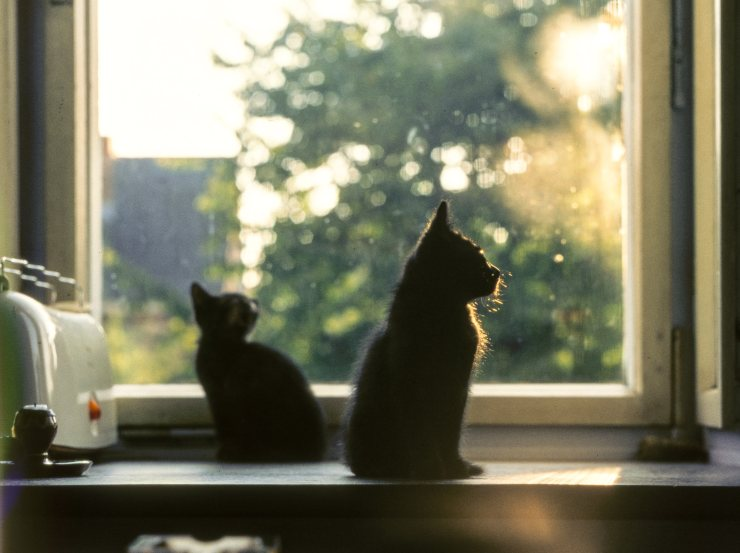 curiosity about cats