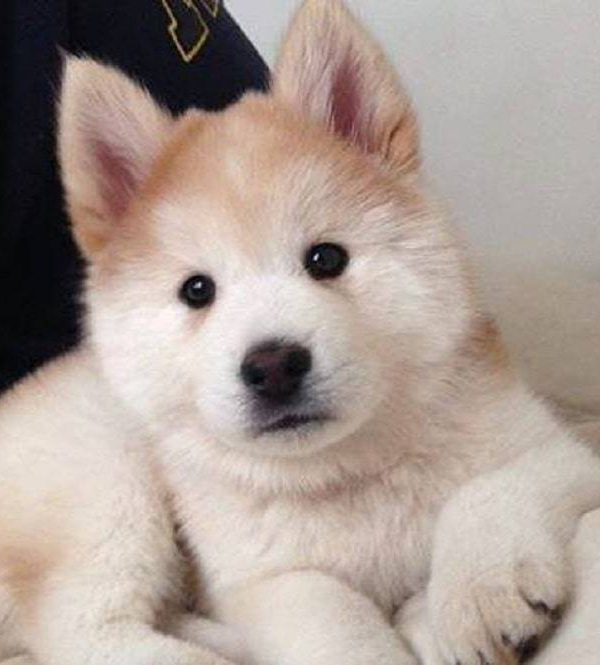 Top 8 Dogs Never Seen: Photo and Characteristics