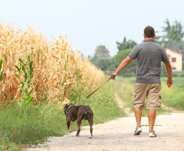 Dog Owners – what they are, risks, fines & responsibilities