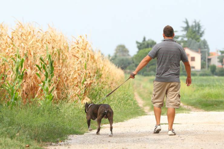 The duties of the dog owner