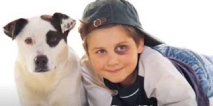 similar dogs