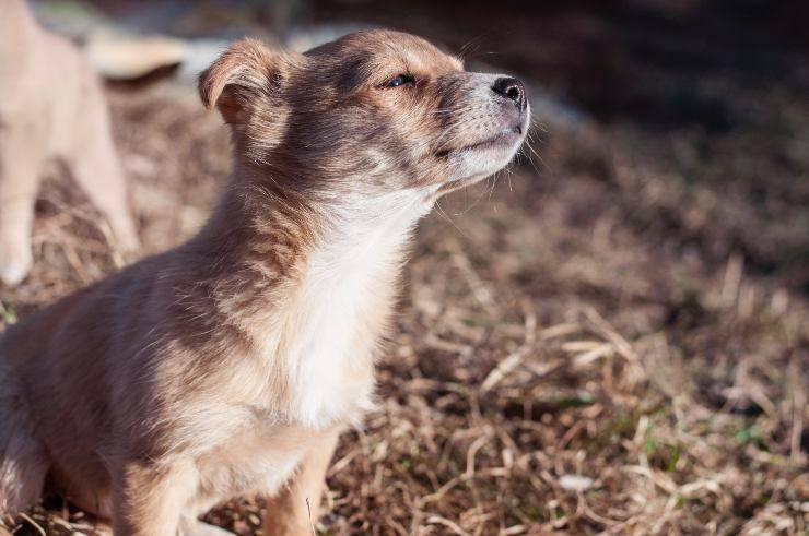 How home smells affect the dog