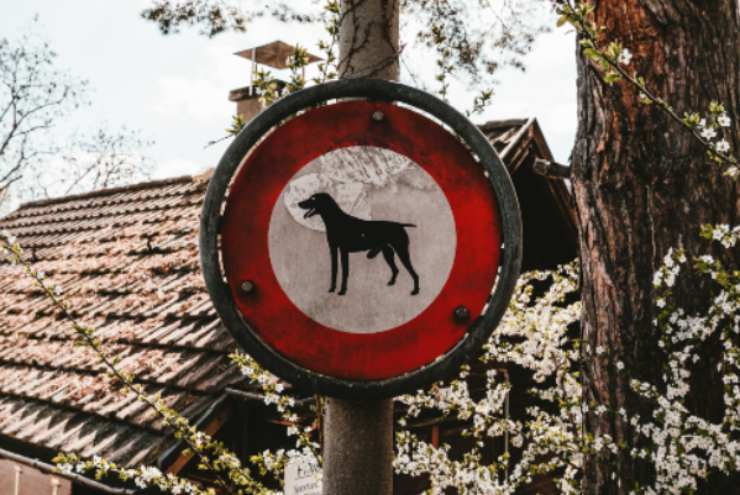 Pet-friendly city in Italy