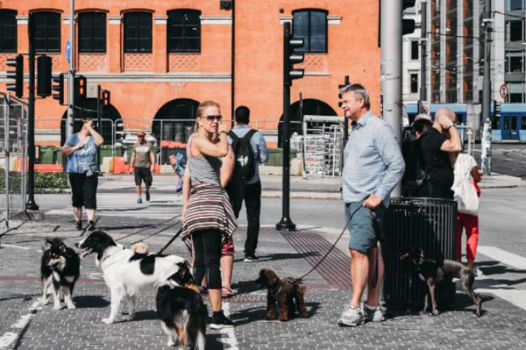 Pet-friendly cities in the world