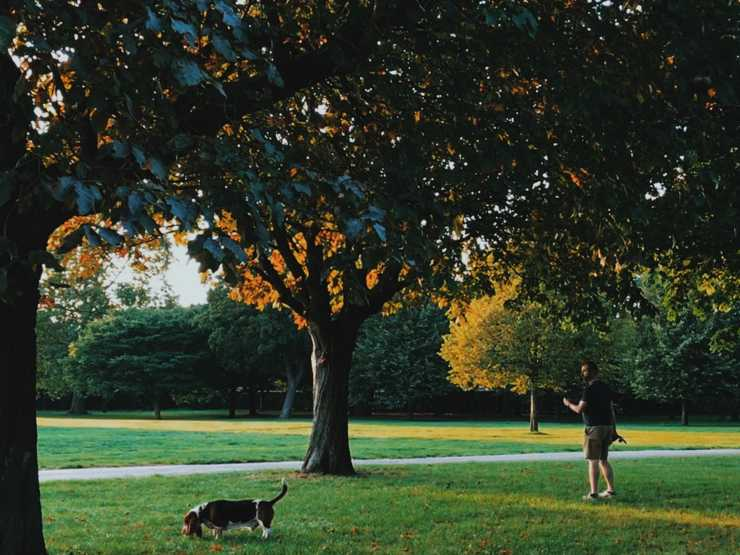 Best parks for the dog