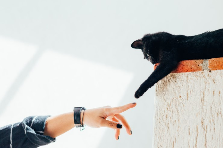 Receive respect from the cat