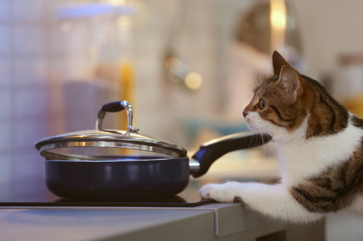 Cat and pan