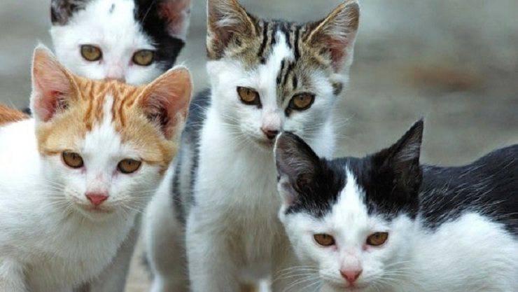 many cats cats
