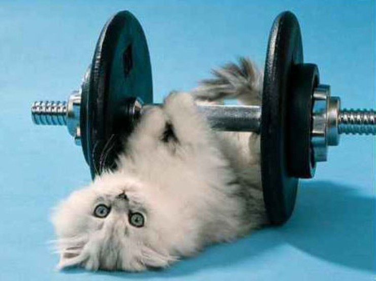 Exercise for cats: how much is needed and how best to do it
