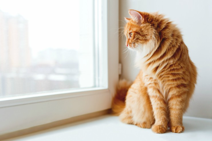 Puss at the window