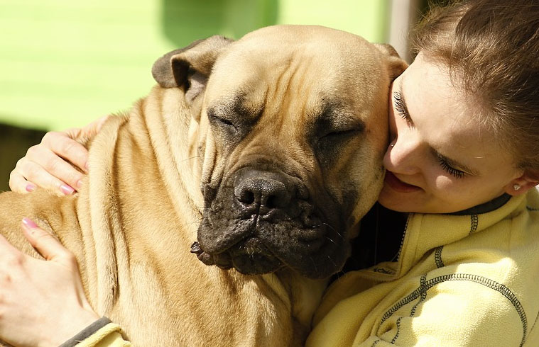 The 25 largest dogs in the world Curiosities From The World, Facts, Knowledge