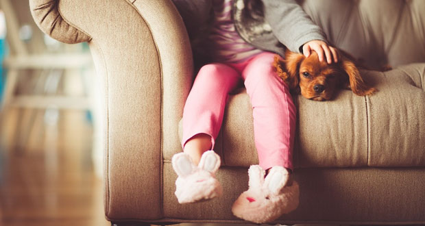 why should you have a dog's health?