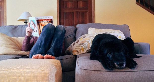why stress is a dog worth