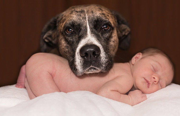 TOP 7 facts why you should have a dog
