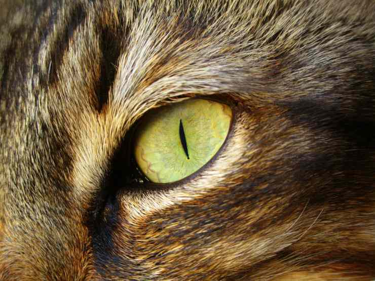 The cat's eyes change color