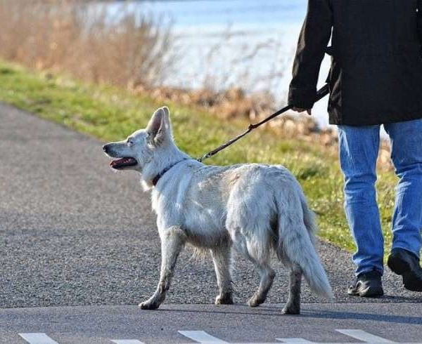 Dog walking tips for dog walkers – 3 tips for spacing
