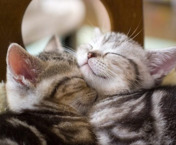 when will my cat stop hissing at new kitten: 5 Best tips