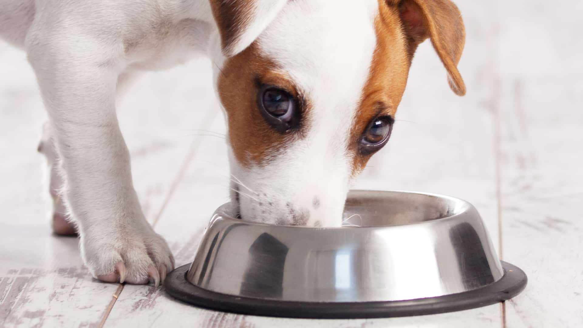 Top 6 Best Salmon Oil for Dogs  2020: Buying Guide