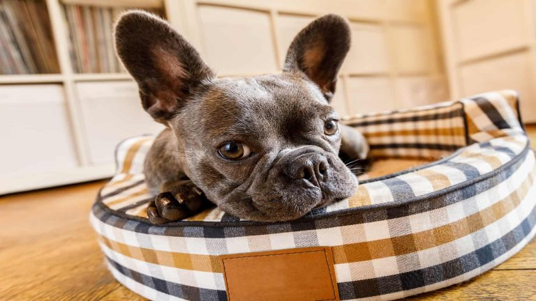 Top 5 Best dog bed 2020: Buying Guide