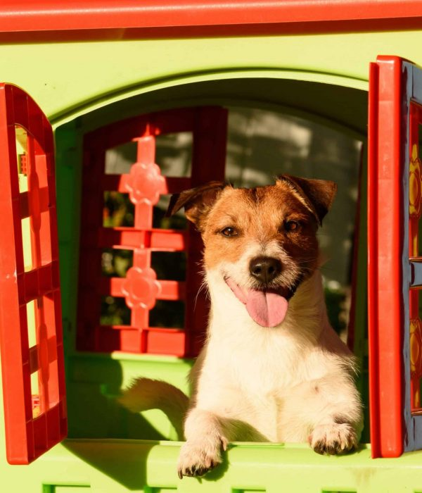 Top 5 Best dog beds for large outdoor: buying guide