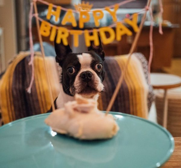 Dog Birthday Parties: 10 Ideas For The Best Party
