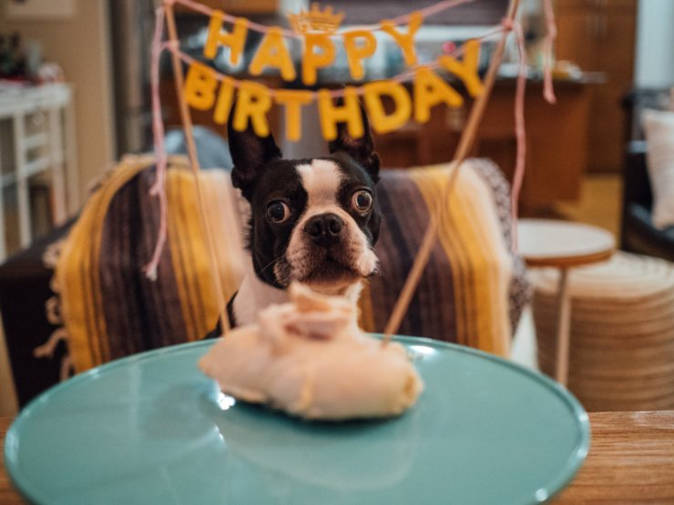 How to prepare a birthday party for dogs