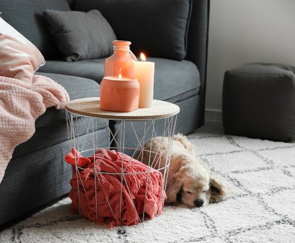 Can air freshener harm your dog? Truth (Essential Oils)