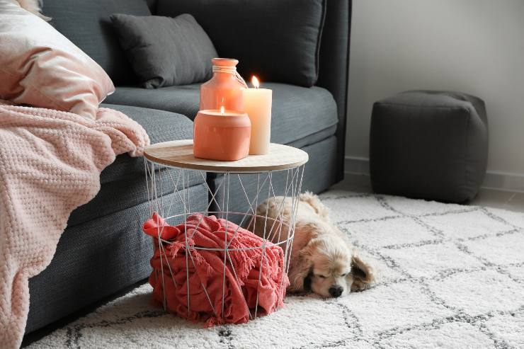 air freshener can harm your dog