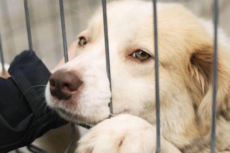 dog adopted shelter