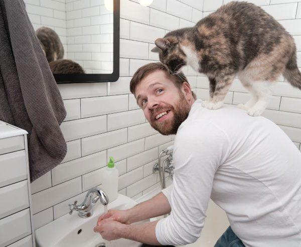 when were cats domesticated: scientific proof