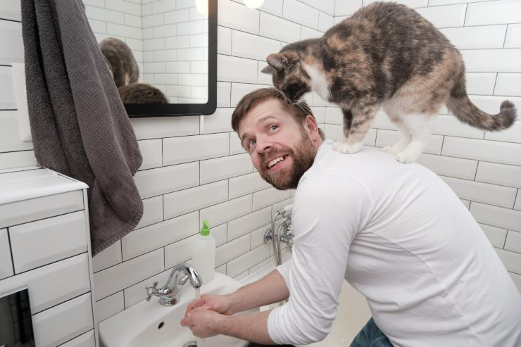 cats have domesticated men