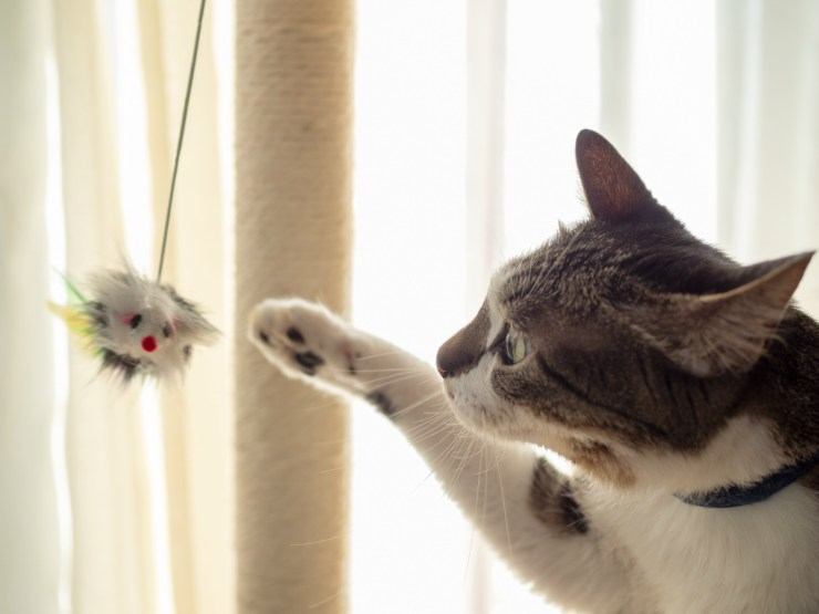 Dangerous objects for the cat outside and inside the house: what they are