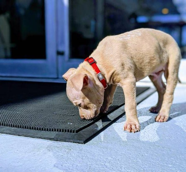 How smells in the home affect the dog: Good or Bad